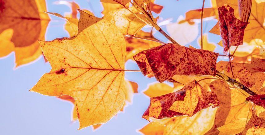 autumn-3763897_1280